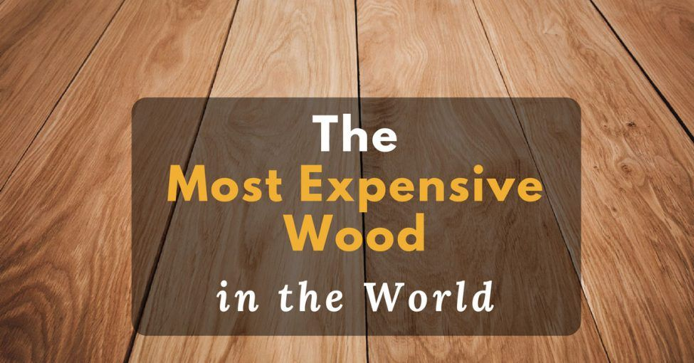 Top 4 Most Expensive Wood in the World 2018