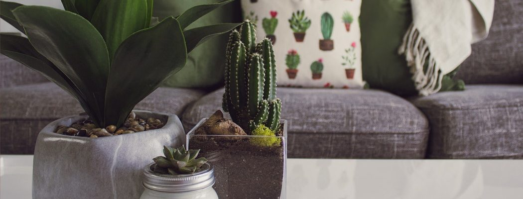 Get The Green On For Your Home Decor