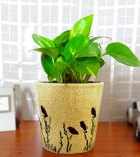 Natural Money Plant in Brown Bucket Aroez Pot by Rolling Nature Funriture20